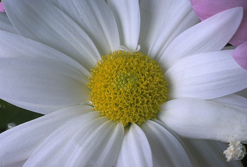 flower-closeup