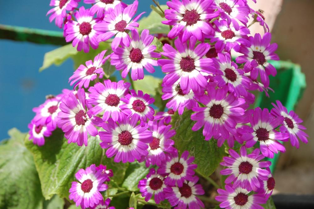 Flowers, flowers everywhere....... (3/6)